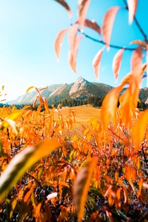 Golden leaves decorate the Flatirons Boulder Colorado USA  by Hansi