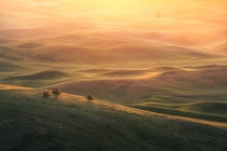 Golden Sunrise in the Palouse region of Washington  photo by Jesse L Summers