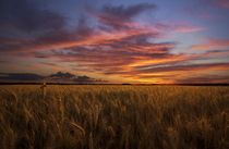 Golden Wheat Field Kiev Ukraine  Photo by Alexei Milok