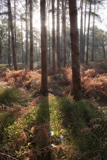 Good morning from the forest - Cannock Chase UK