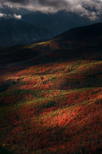 Gorgeous morning light on fall foliage in the Wasatch Range Utah USA