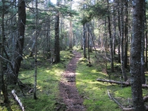Grafton Loop Trail Mahoosuc Mountains Maine near East Baldpate summit  taken by me