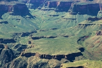 Grand Canyon Arizona Covered Green in Desert Grass