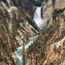Grand Canyon of the Yellowstone from artists point last July when the falls were roaring