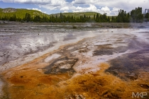 Grand Prismatic Spring area Yellowstone WY