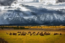 Grand Teton National Park  - Glen Hush for Natl Geographic Contest