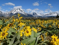 Grand Teton National Park on a Gorgeous Summer Day
