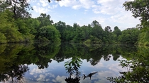 Granddads Pond Deepwoods of North Central Louisiana Amazing view with plenty of wild life