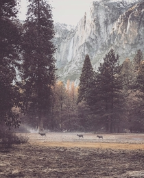 Grazing in scenic spots Yosemite edition