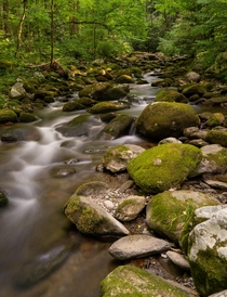 Great Smoky Mountains National Park is full of places that look like this