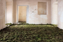 Green floor of an abandoned home in Tehran Gohar Dashti
