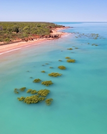 Green mangroves being swallowed at high tide by the turquoise waters of Broome WA Australia