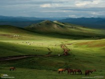 Green Mongolian steppe