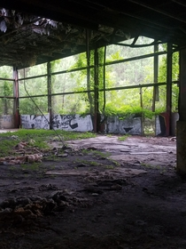 Greenery Claiming an Abandoned Chemical Plant NC