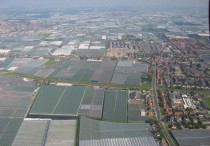 Greenhouses in Westland The Netherlands