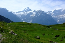 Grindelwald Switzerland A normal summer day