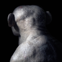 Hairless chimpanzee