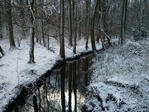 Half-frozen creek in a German forest