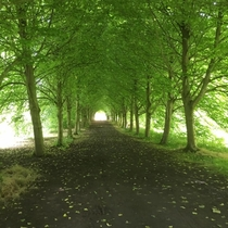 Hallway of Trees in Castle Ward Northern Ireland