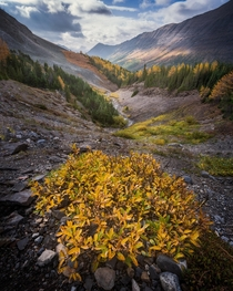 Happy First Day of Fall from the Canadian Rockies Its larch madness out here Shot a couple days ago in the Kananaskis Alberta