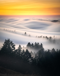 Happy Fogust Fog rolling and cutting through trees Mt Tamalpais Mill Valley California