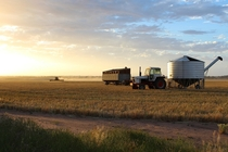 Harvesting a crop in Lake Grace Western Australia