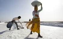 Harvesting salt in the Little Rann of Kutch in western Gujarat India