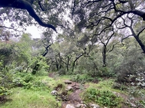 Haunting Oak Woodland in Southern California  x