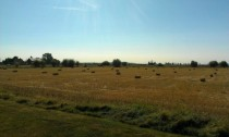 Hay bales and horses in the background OC taken from my yard