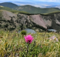 Haydens paintbrush   at Latir Peak NM