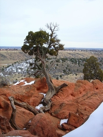Heard you guys like Garden of the Gods CO Tree in the Winter