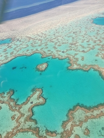 Heart Shaped Reef Whitsunday Island QLD Australia  From a helicopter landed on a pontoon and snorkled close by afterwards Unbelievable experience