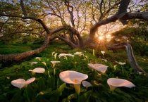 Heaven on Earth in a Grove in California Photo by Marc Adamus