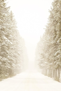 Heavy snow falling from tbe trees made for this dreamy winter drive in Alberta Canada over the weekend x