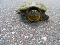 Helped him cross the road he looks pissed