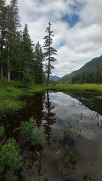 Hemlock reflections while hiking in Nisnak Meadows Vancouver Island BC