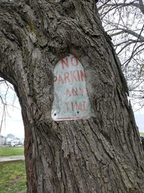 Heres a Tree No Parking Sign