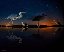 Herons in Time and Space by Bence Mt