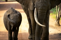Hide Your Eyes Tiny Elephant - Amboseli Kenya