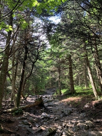 Hike up Mount GreyLock near Williamstown Massachusetts