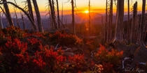Hiked the PCT last year one of my fav sunsets was here at Mt Washington Wilderness Oregon