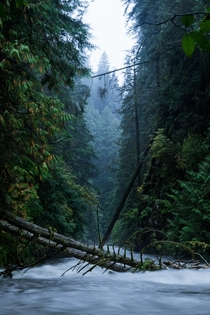 Hiked through the rain to capture this Lynn Canyon in Vancouver BC