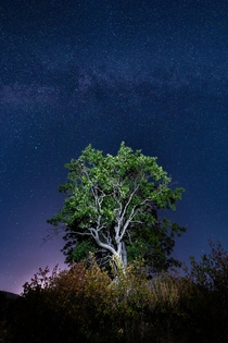 Hiked up this hill to see the Perseids got distracted by this tree Emigrant Lake OR