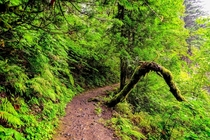 Hiking in the fairytale forest after the rain in beautiful Oregon  IG GiorgioSuighi