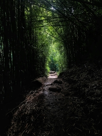 Hiking though a Hawaiian bamboo forest