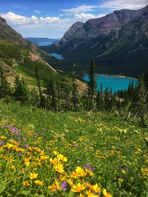 Hiking through a super-bloom at Grinnell Glacier Trailhead Glacier National Park August