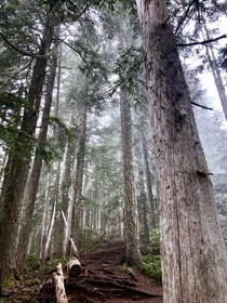 Hiking through misty rainforest Olympic National Forest
