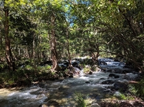 Hiking through the Daintree Rainforest along the Mossman River Finlayvale  OC