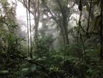 Hiking Through the Monteverde Cloud Forest