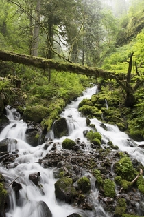 Hiking Trail between Wahkeena Falls and Multnomah Falls Oregon  Photograph Life